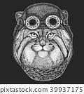 cat, manul, sketch 39937175