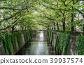 메구로 강, 메구로가와, 신록 39937574