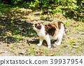 流浪猫 猫 猫咪 39937954