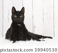 Pretty black cat lying down and looking up 39940530
