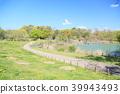 봄의 공원 신록 39943493
