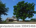 구마모토 현 구마모토시 구마모토 성 이이다 마루 녹나무 삼층 다섯 階櫓 39945466