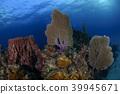 珊瑚 多彩色 多色彩 39945671