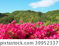 杜鵑花 花朵 花 39952337