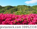 杜鵑花 花朵 花 39952338