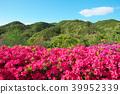 杜鵑花 花朵 花 39952339