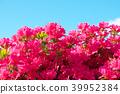 ดอกไม้,ฤดูใบไม้ผลิ,ท้องฟ้าเป็นสีฟ้า 39952384