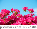 杜鵑花 花朵 花 39952386