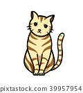 貓 貓咪 毛孩 39957954