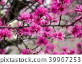 꽃, 플라워, 식물 39967253