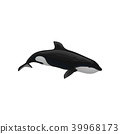 Killer whale marine mammal, inhabitant of sea and ocean vector Illustration on a white background 39968173