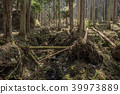 forest, coniferous trees, coniferous tree 39973889