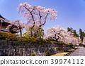벚꽃 눈보라 大石寺 경내 39974112