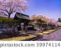 벚꽃 눈보라 大石寺 경내 39974114