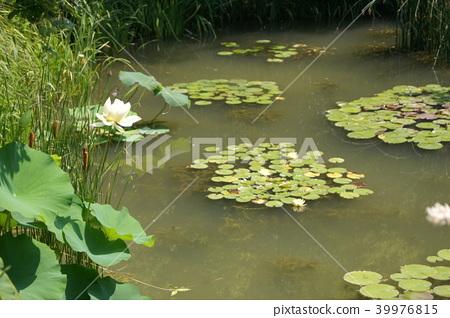 莫奈花園(濱名花園) 39976815