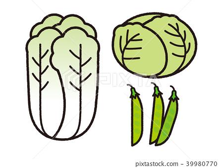 大白菜,白菜等_黑線 39980770