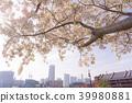 [จังหวัดคานางาวะ] ทิวทัศน์เมืองซากุระมินาโตะมิรา 39980881
