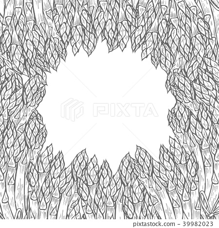 illustrations - asparagus collection. 39982023