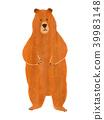 bear, bears, animal 39983148