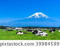 靜岡靜岡縣牧場牧場位於富士山和朝霧高原 39984599