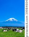 富士山 大農場 牧場 39984604