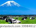 靜岡靜岡縣牧場牧場位於富士山和朝霧高原 39984612