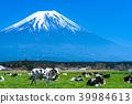 靜岡靜岡縣牧場牧場位於富士山和朝霧高原 39984613