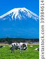 靜岡靜岡縣牧場牧場位於富士山和朝霧高原 39984614