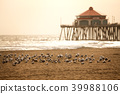 加利福尼亚州亨廷顿海滩 39988106