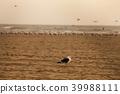加利福尼亚州亨廷顿海滩 39988111