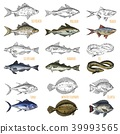 Set of isolated sea or ocean fish side view 39993565