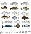 Side view on isolated fish catch sketches 39993567