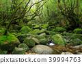 白谷雲水峡 苔藓 沼泽 39994763