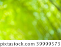 blur bamboo background 39999573