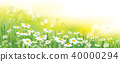 Vector nature  background, daisy  flowers field. 40000294