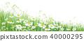 flower, daisy, field 40000295