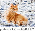 cat, pet, animal 40001325