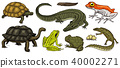 vector, amphibian, frog 40002271