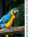 Ruri Macawo 40003538