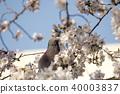 휴식하는 비둘기 40003837