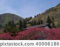 hana peach, spring, botanic 40006186