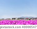 일본의 시골 풍경과 다년초 40006547