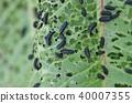 leaf, bug-eaten, worm-eaten 40007355
