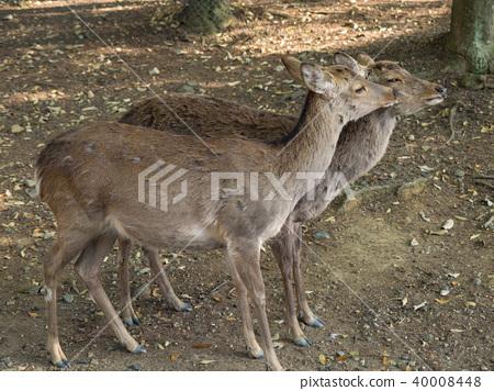 一隻鹿 40008448