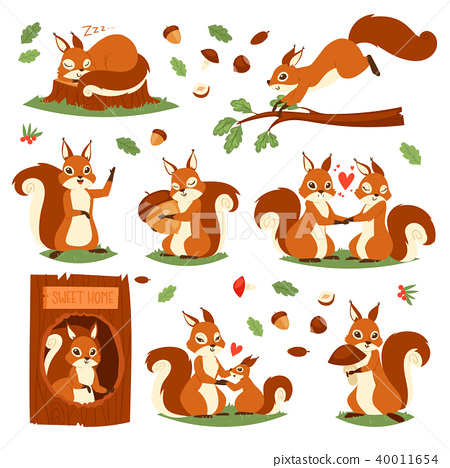 Squirrel vector cute animal jumping or sleeping in wildlife and lovely animalistic couple 40011654