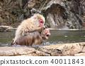싸움중인 원숭이 40011843
