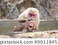 원숭이, 몽키, 일본 원숭이 40011845
