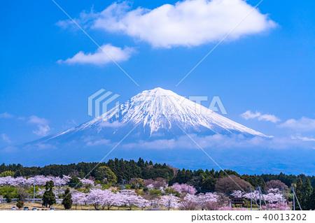 富士山 櫻花 櫻 40013202