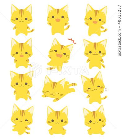 Cat 40013257