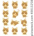 고양이 40013258